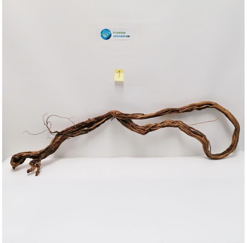 Arbol Milenario ( Millennium Tree )