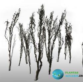 Arboles Lejanos ( Faraway Trees )