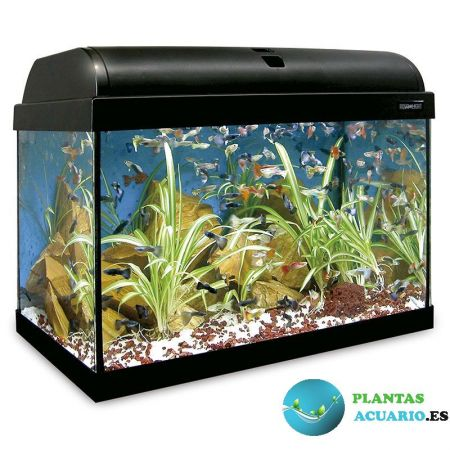 Kit Acuario AQUA-LIGHT 45 Litros