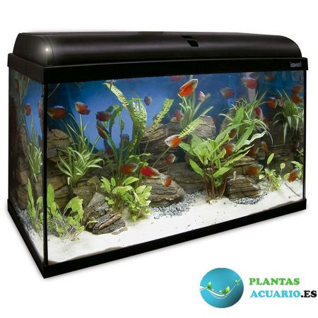 Kit Acuario AQUA-LIGHT 100 Litros