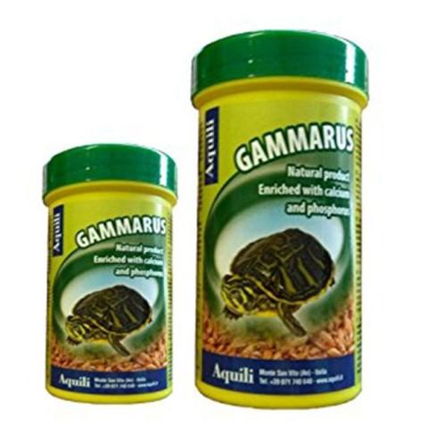 Gammarus Aquili